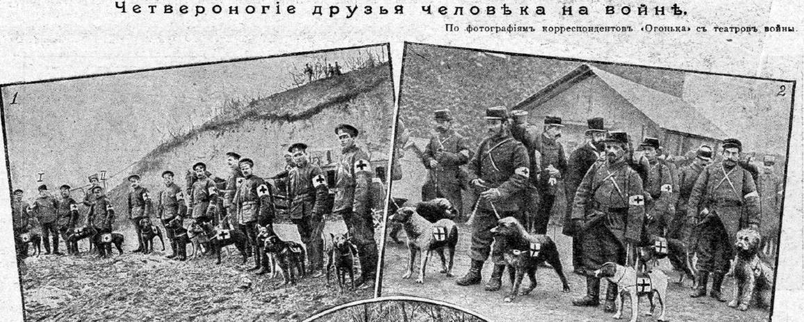 Собаки-санитары в русской и французской армии, Первая мировая война