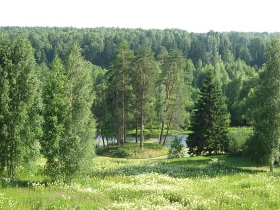 Нам разложит пасьянс осенний лес